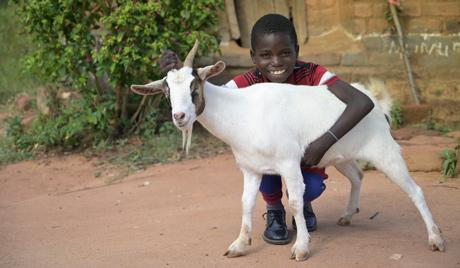 Zambia Health